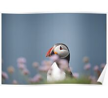 Puffin in pink. Poster