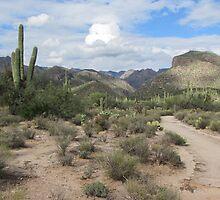 Desert Pathway by Ingasi