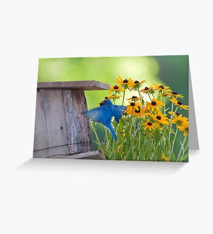 Bluebird flying thru Black Eyed Susans Greeting Card