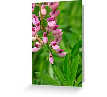 Pink Lupine II Greeting Card