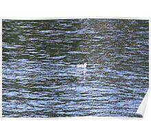 Bird on Lake George Poster