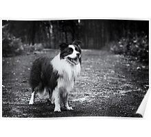 Forest Dog (Joker) Poster