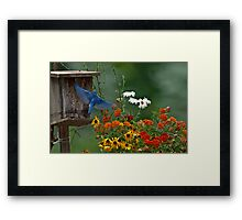 BLUEBIRD and colorful flowers Framed Print