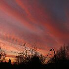 Rosy-Fingered Evening by Wolf Read