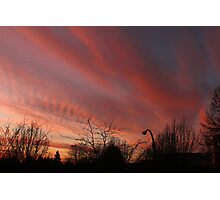Rosy-Fingered Evening Photographic Print