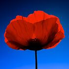 Poppy Love by Fern Blacker