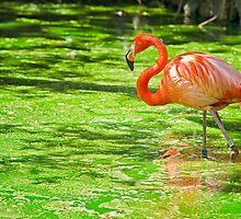 The Pink Flamingo by Rashad Penn