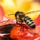 Shoo Bee Do! by Ken Haley