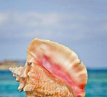 Conch Shell on Dock - tall by Rashad Penn