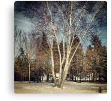 Birch Tree in Winter Original Canvas Print
