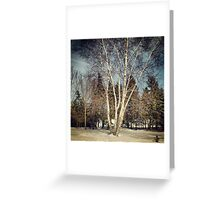 Birch Tree in Winter Original Greeting Card
