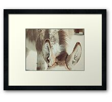 Equine Donkey Ears Framed Print