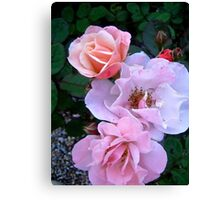 Governor General's Roses13 Canvas Print