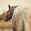 Appaloosa Horse Spots by jamieleigh