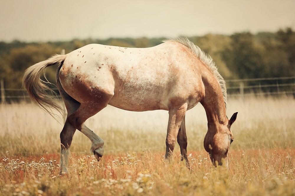 Appaloosa Horse Grazing by jamieleigh