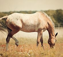 Appaloosa Horse Grazing by jamieleigh