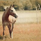 Appaloosa Horses by jamieleigh
