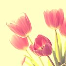 Tulips in high key by Tam  Locke