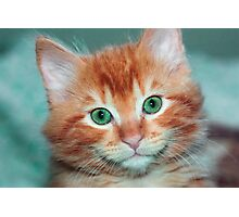 Kitten Photographic Print