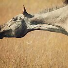 Appaloosa Horse Head by jamieleigh