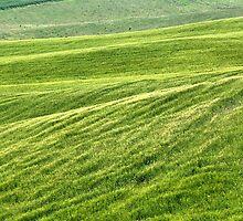 Field of Greens-Siena, Italy by Deborah Downes