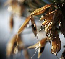 Seed Pods by Samsticks