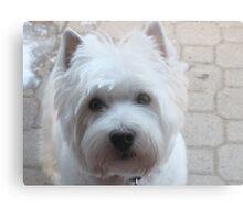 Canine Communication Metal Print