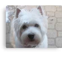 Canine Communication Canvas Print