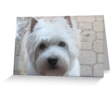Canine Communication Greeting Card