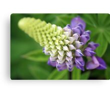 A study in depth of field Canvas Print