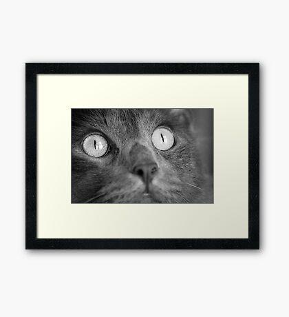 Bear Bear Framed Print