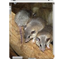 Turkish Spiny Mice iPad Case/Skin