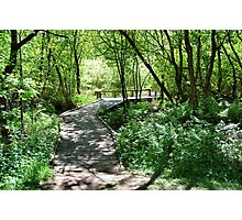 The Dappled Path.. Photographic Print