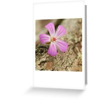 Herb Robert in the woods against bark of a tree Greeting Card
