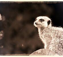 Retro Meerkat by stevealmighty