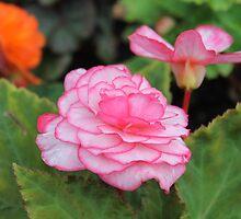pretty in pink by juliepilcher