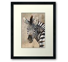 Plains Zebra Framed Print