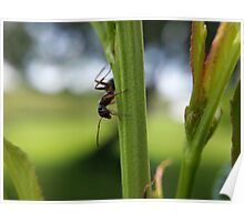 ant on a colorful stalk Poster
