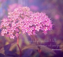 Spirea  by afeimages