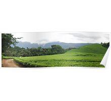 Tea Estate Poster