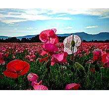 It's Poppy Love Photographic Print
