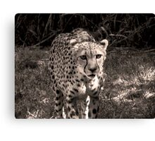 grayscale stray Canvas Print