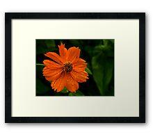 Dew and Flower Framed Print