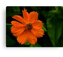 Dew and Flower Canvas Print