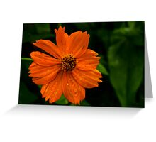Dew and Flower Greeting Card