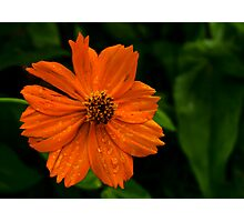 Dew and Flower Photographic Print