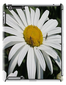 Close Up Common Daisy with Winged Insects by taiche
