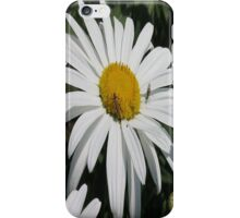 Close Up Common Daisy with Winged Insects iPhone Case/Skin
