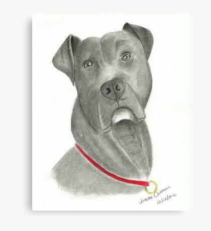American Bulldog - Pencil Portrait Canvas Print