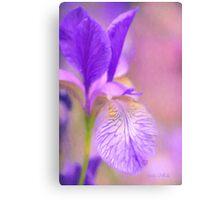 Iris in Pastel Canvas Print